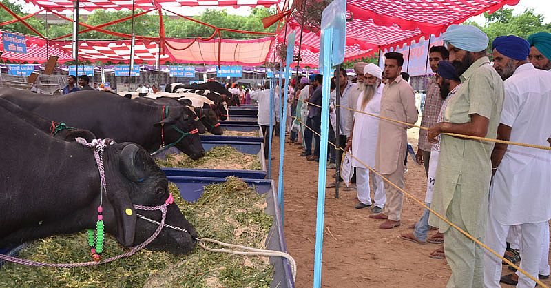 armers visit the 21st Pashu Palan Mela held on 22nd September, 2016