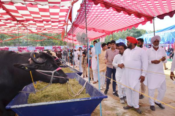 Farmers visited the 26th Pashu Palan Mela (16-3-2019)