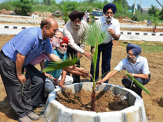 Dr. A.S Nanda, Vice-Chancellor, GADVASU and other faculty implanting the palm trees on occasion of Teachers Day