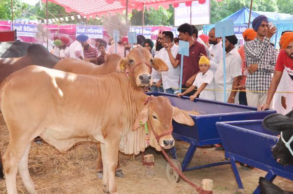 Farmers visited the Pashu Palan Mela (21-9-2019)