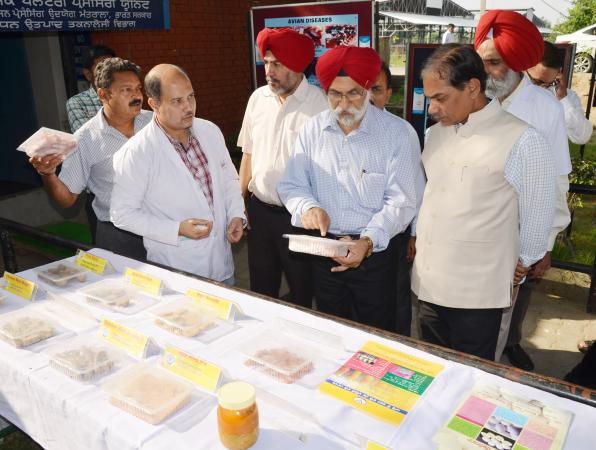 Dr. A. S. Nanda, Vice Chancellor and other officers brief the exhibit stall  to Dr. Trilochan Mohapatra, DG, ICAR on the visit of University on dated 8-10-2018