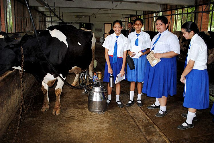 Student visit at Dairy Farm