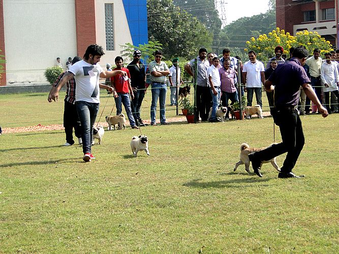 Celebration of Dog Show