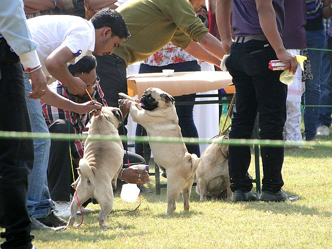 Celebration of Dog Show