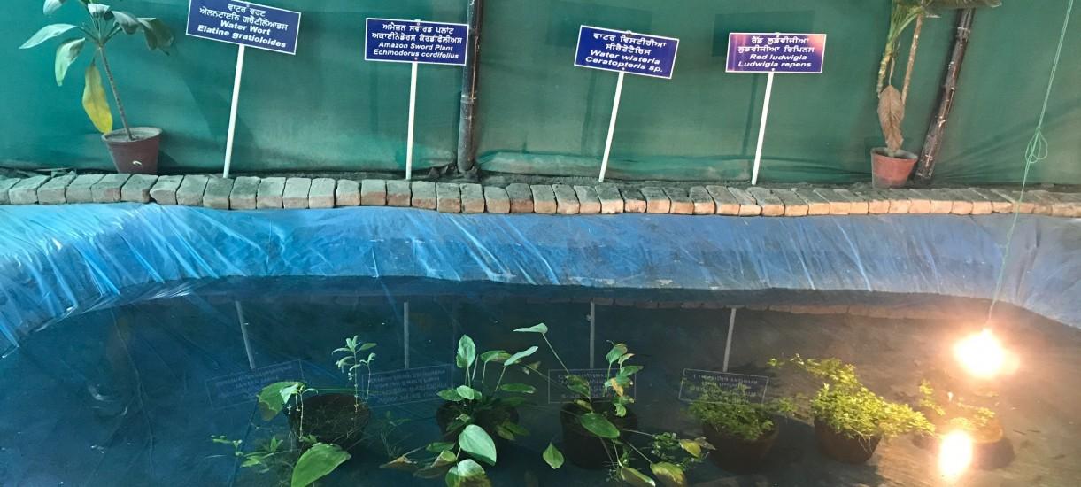 Backyard unit for ornamental aquatic plants