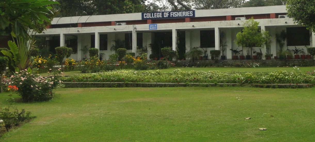 College of Fisheries