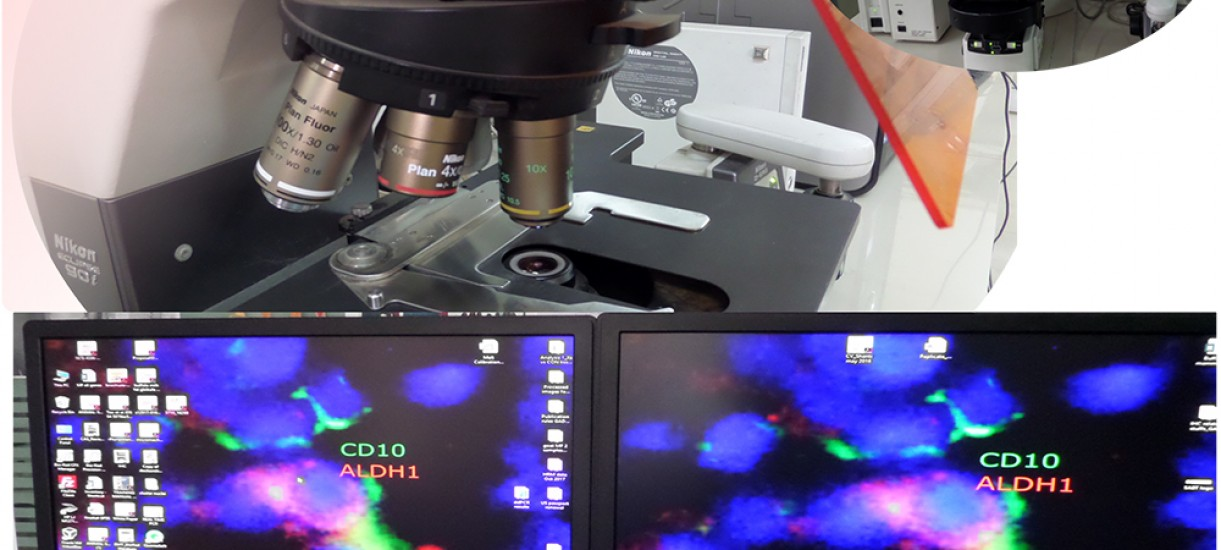 Inverted flourescent Microscope