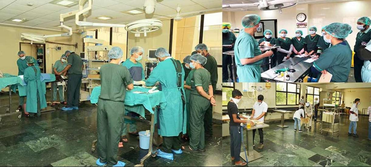 Teaching Veterinary Hospital