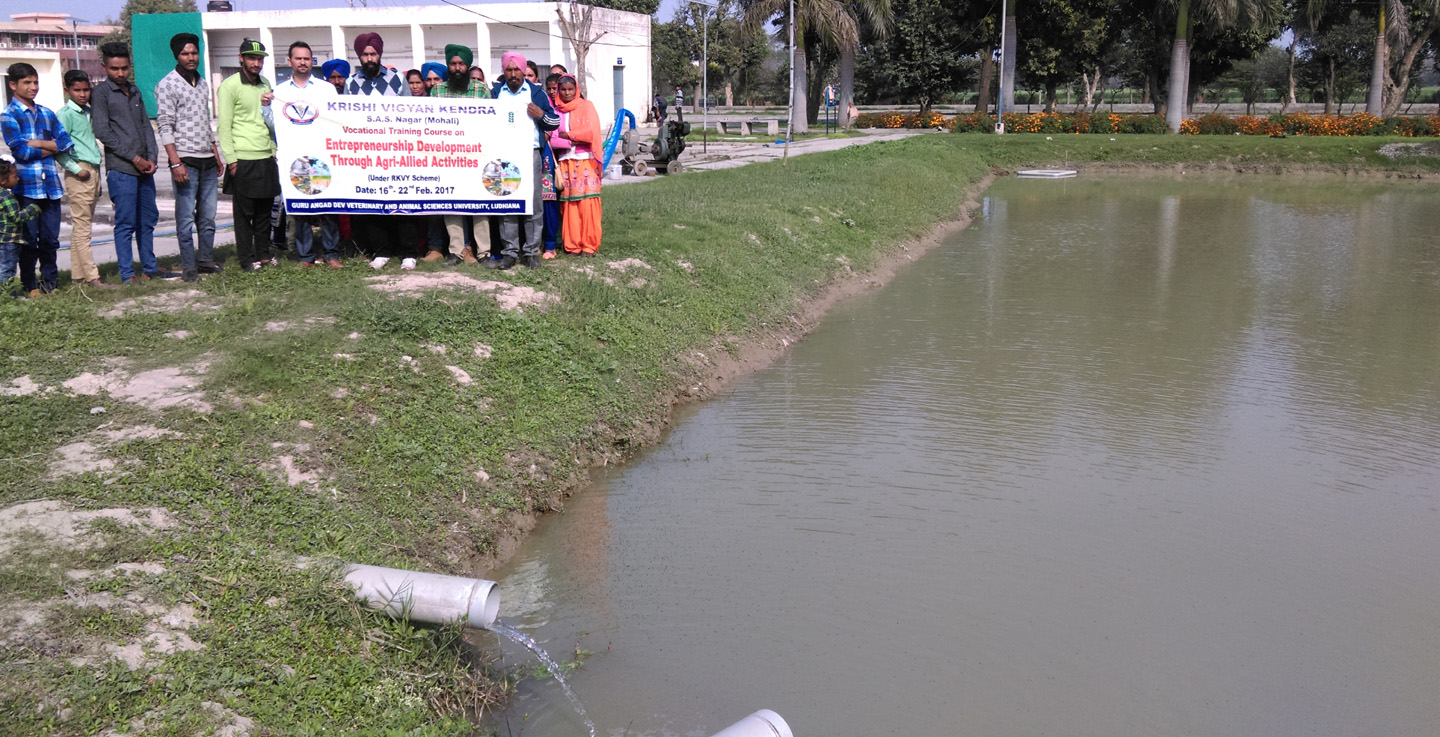 Image result for fish farming in punjab